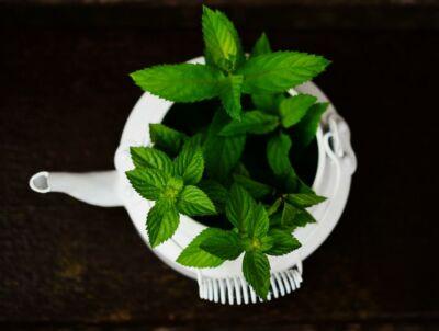 A borsmenta tea jótékony hatásai